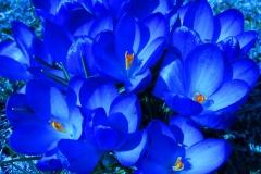 thumbs_4-meredith-photo-blue